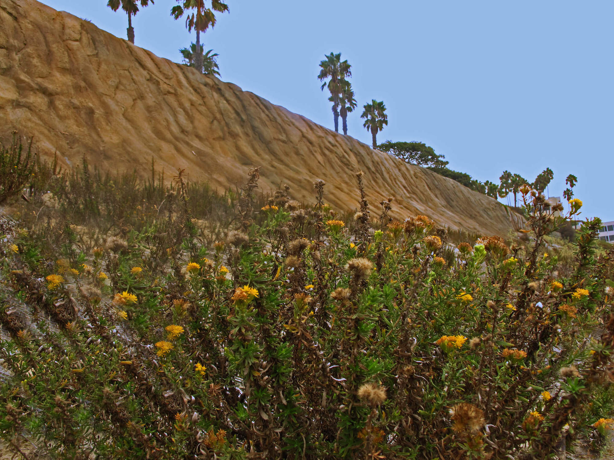"Featured image for ""Ocean Blvd. Bluff Erosion and Enhancement"""